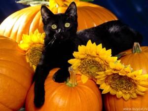 1322503106 21 656 300x225 Хеллоуин.......